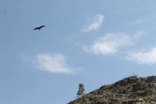 Парящая в небе птица над Лысой горой