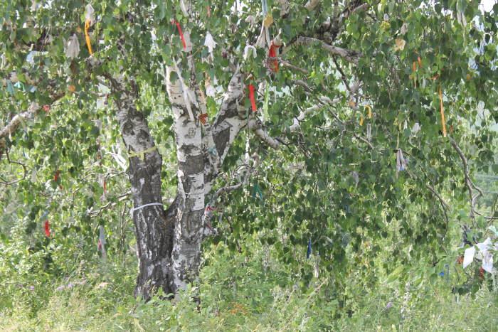 Дерево с повязанными лентачками