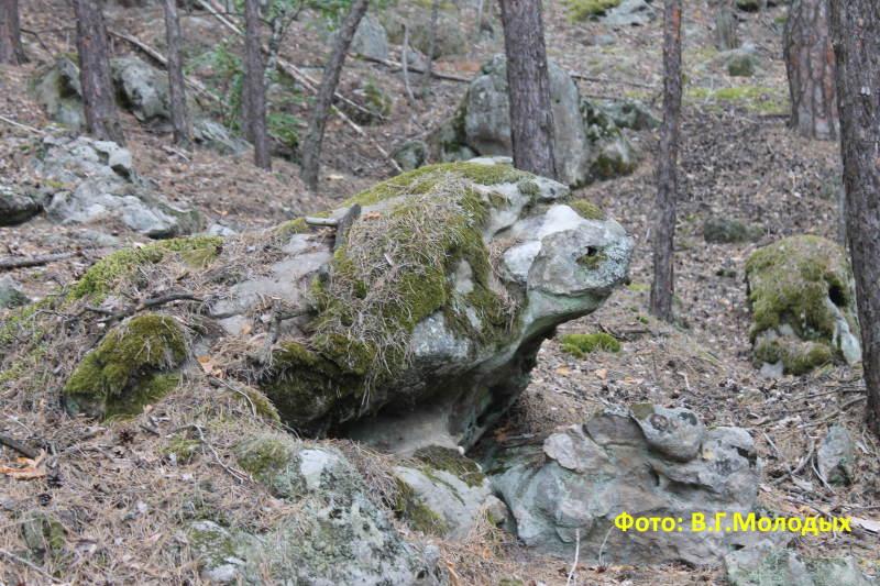 Симпотичный зверь Рачейских Альп